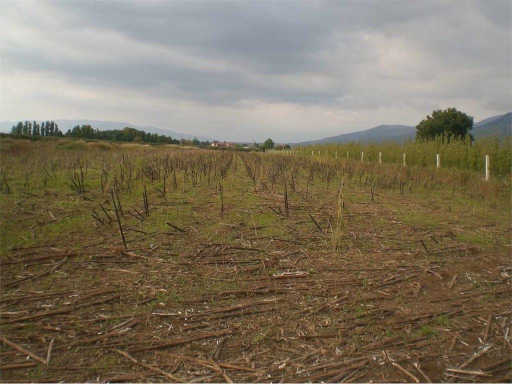 SERMONETA – Terreno agricolo