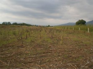 SERMONETA - Terreno agricolo