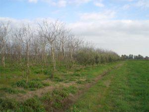 Terreno Agricolo Latina Rif. V000163