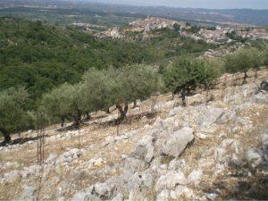 CORI - Casale con terreno e piante di ulivo